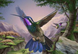 Играть в роли колибри