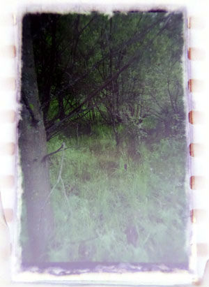 Оцифровка старой фотопленки